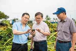 台東農損嚴重 稻田成泳池
