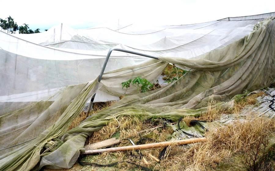 ▲白鹿颱風將網式棚架的農業設施,不是被掀起就是錏管支架被折斷塌陷。(楊樹煌攝)