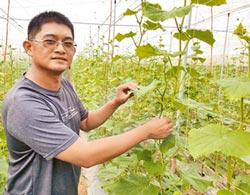 軍事化管理 退伍當農友 種小黃瓜有成