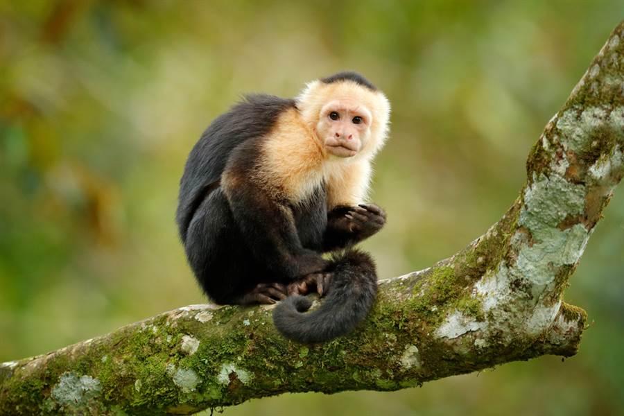 猴子瘋狂磨石 下秒舉動眾人嚇歪(示意圖/達志影像)