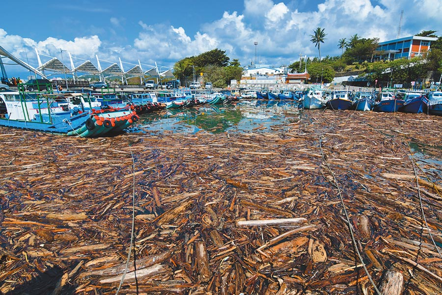 白鹿颱風過後,大量漂流木湧入富岡港,漁船及客輪全都動彈不得。(莊哲權攝)