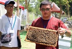 推廣林下經濟 屏科大打造森林養蜂養菇場