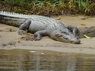 鱷魚在水下長這樣 網驚呼長知識!