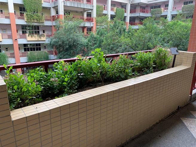 台中市東光國小的清淨空氣綠牆。(圖/環保署提供)