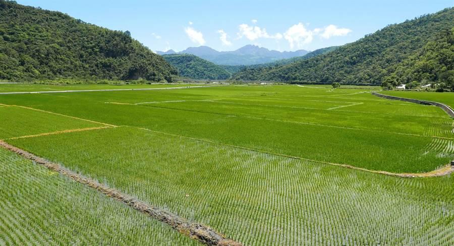 獲產銷履歷驗證農地可申請環境獎勵金每年每公頃1.5萬元。(資料照,農委會提供)