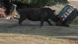 犀牛狂撞保育車 360°翻滾畫面超驚悚