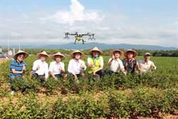 跨域合作振興苗栗八甲茶產業 省工栽培技術提升品質