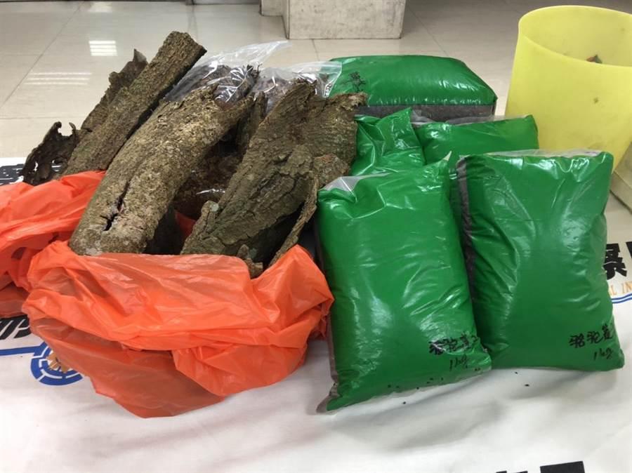 警方表示,相思樹皮必須提煉才會成為毒品,直接啃食沒有任何效用。(林郁平攝)