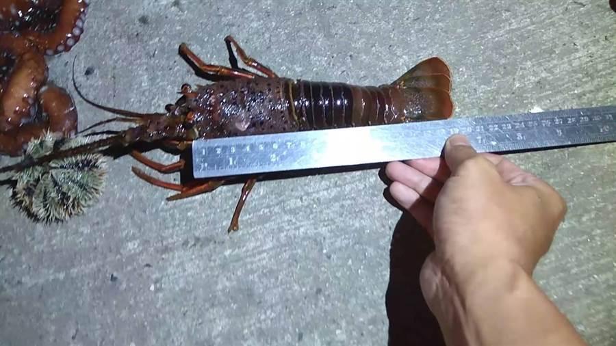 海巡在瑞芳象鼻岩海域發現潛水客摸黑違規捕撈小龍蝦。(許家寧翻攝)