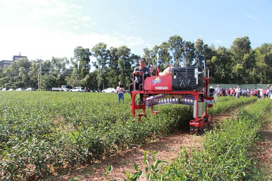 以乘坐式機械採茶可減少人力負擔,提升採收效率。(何冠嫻攝)