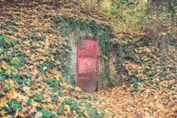 樹林發現神秘木門!竟藏驚人真相