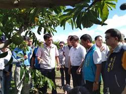 台東釋迦災損 農委會每公頃補助9萬