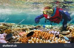 大堡礁5年體檢出爐 從糟糕降至非常糟糕