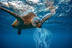 塑膠氾濫,2050年海洋塑膠垃圾比魚還多