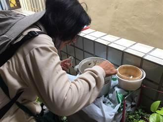南市北區新增1例本土登革熱病例