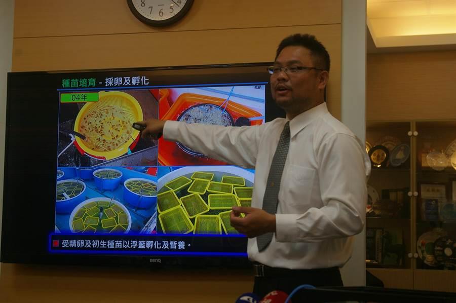 海洋大學助理教授徐德華說雙花團隊仍在研究突破無法量產花蟹種苗的困境。(中時報系資料照片)