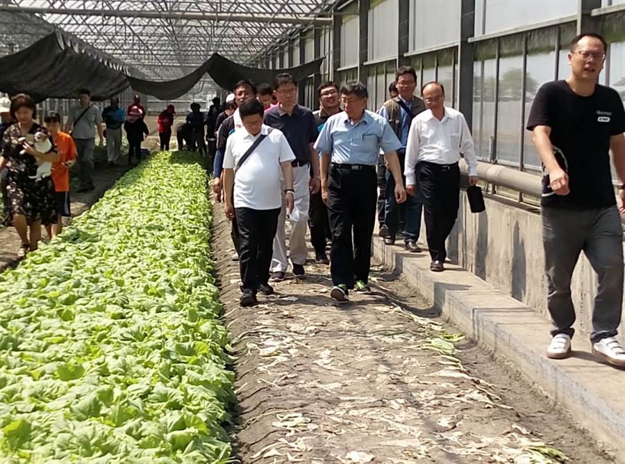 台北市學校這學期將實施每周一有機蔬菜,市長柯文哲(前左二)上午到雲林縣有機農場了解蔬菜生產。(許素惠攝)
