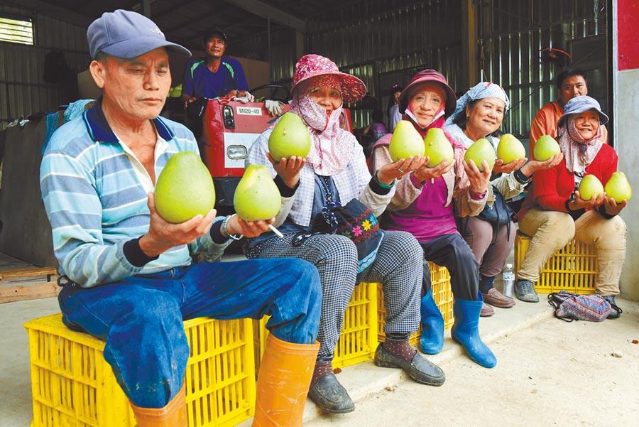 花蓮文旦柚農展示種植的優良文旦柚。(花蓮縣政府提供/王志偉花蓮傳真)