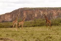 肯亞「獅子王」公園山洪爆發 7遊客不幸身亡