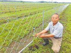 租有機農地 推廣農產兼濟貧