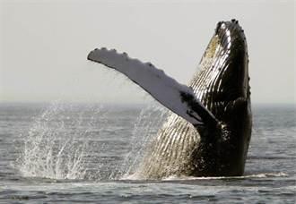 驚!全球鯨豚擱淺事件頻傳 恐與軍事聲納有關