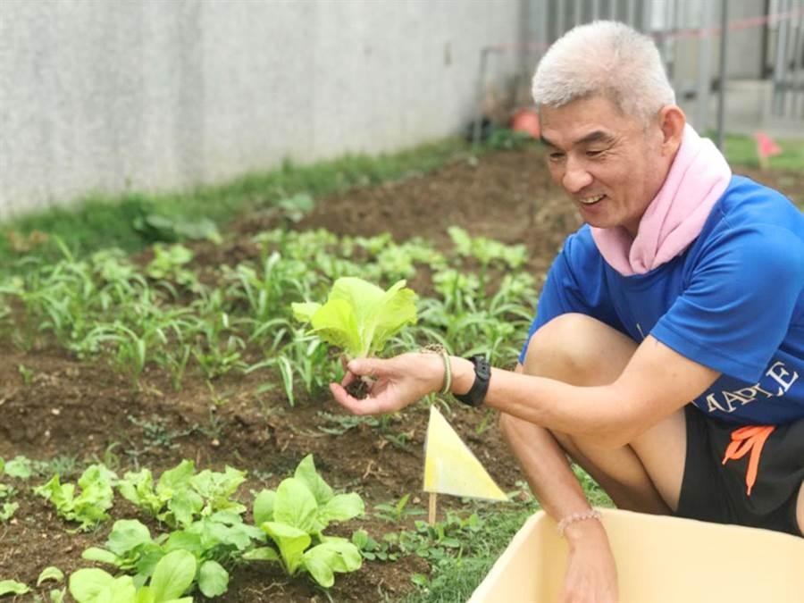 心路基金會辦理樂朋家園因長期面臨「食不易」問題,並考量服務對象的健康維持及發展,因此規劃「澎湖智能障礙者溫(網)室菜圃」。(心路基金會提供/林良齊台北傳真)