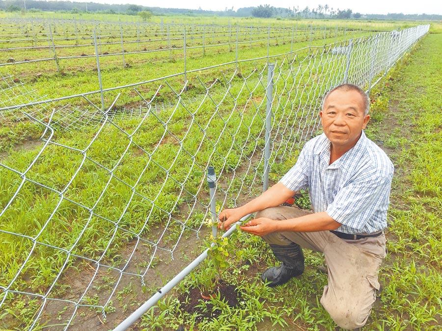 投身有機耕作的屏東農夫黃穎對鄰田汙染問題很無奈。(謝佳潾攝)