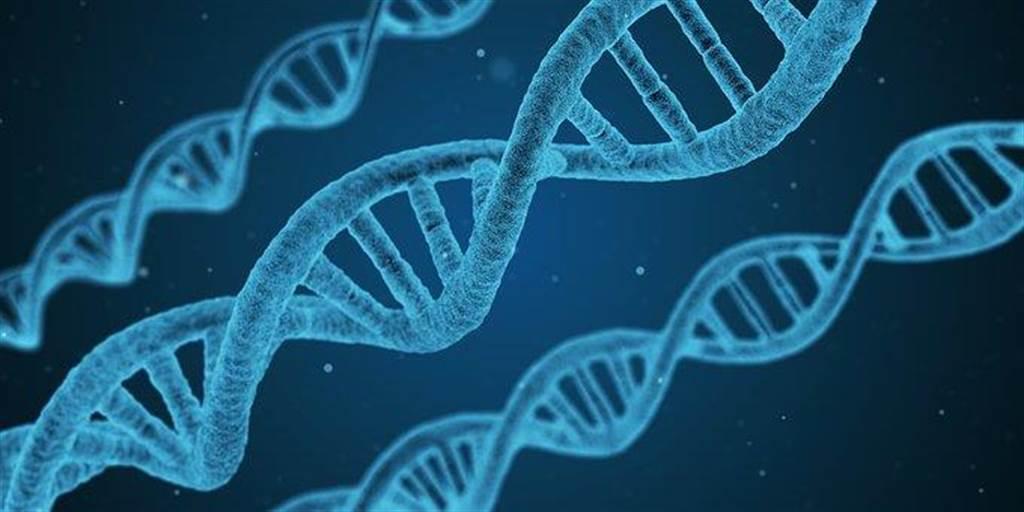 實驗證明,身體含有OR6A2特定基因的人,為什麼會那麼討厭香菜。(圖摘自pixabay)