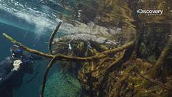 悚!墨西哥這個水底洞穴!竟是凶狠鱷魚群當守門員