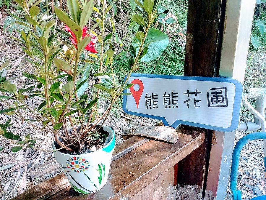 彩繪手作個人風格的杜鵑盆栽。