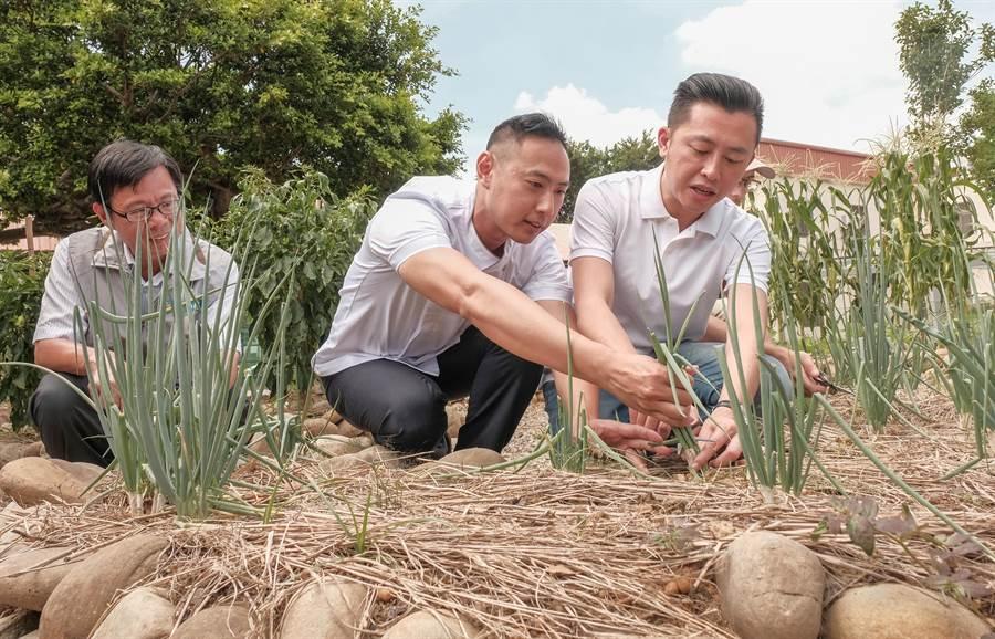 市長林智堅(右)和翟九麵店老板翟保融(左)在將軍村食物森林採收蔥。(羅浚濱攝)