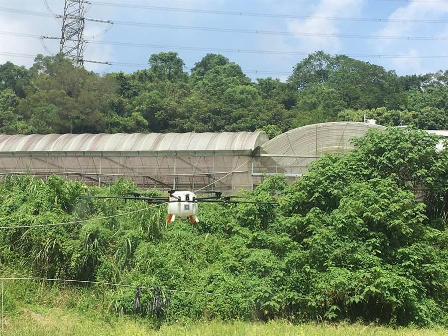 苗栗縣政府農業處與大湖地區農會合作,3日在大湖鄉草莓園進行無人機噴灑與田間管理觀摩會。(巫靜婷攝)