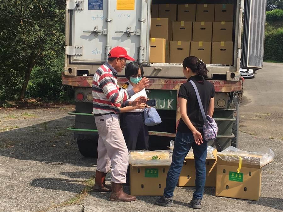 大湖草莓幼苗外銷國外,防疫局一早就來檢疫,莓農范銹龍(左)忙得不可開交。(巫靜婷攝)