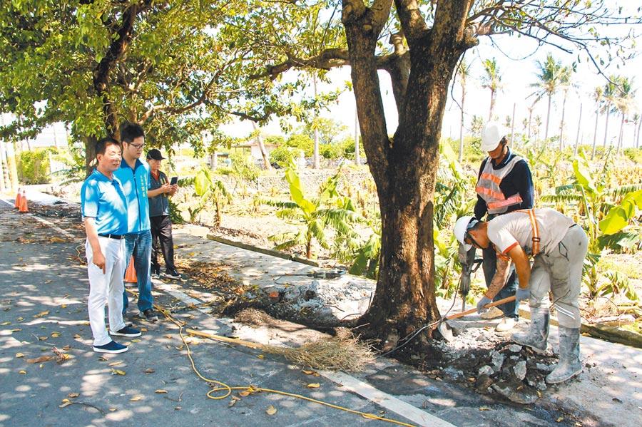 15棵路樹遭水泥封死,台東市長張國洲前往救援,要求工人打掉水泥。(台東市公所提供/莊哲權台東傳真)