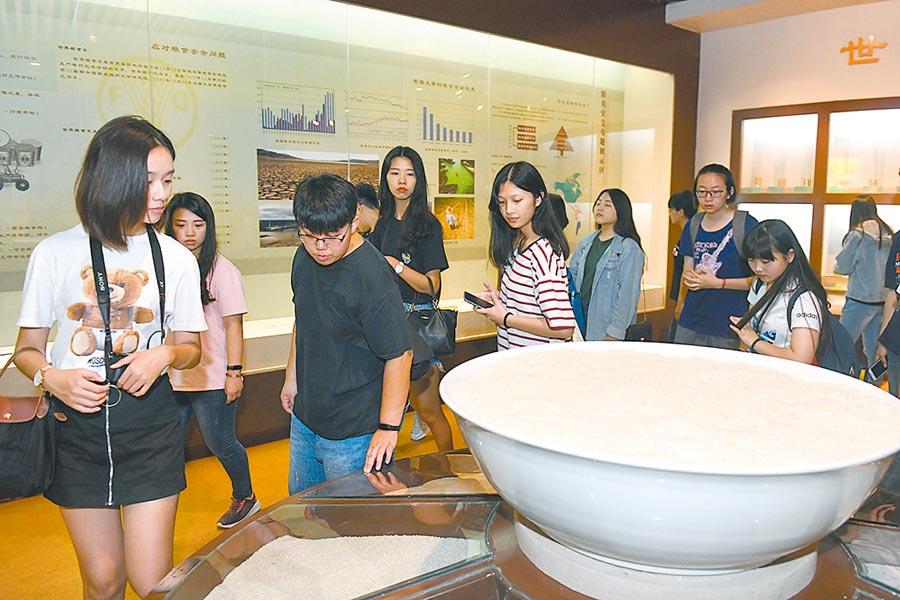 7月13日,台灣學生在安徽省廬江台灣農民創業園內的中國稻米博物館參觀。(新華社)
