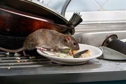 速食店見小老鼠 誤跳油鍋秒炸熟