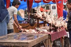 印尼雞肉價格崩盤,農業部下令毀蛋