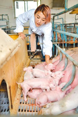 陸豬隻行情飆 仔豬價年增翻倍