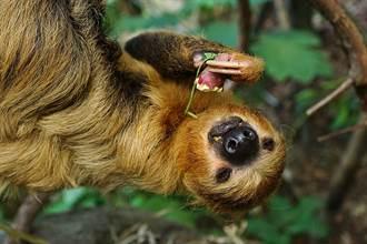 雨林模擬成超市!「穿山甲館」思索大自然愛地球
