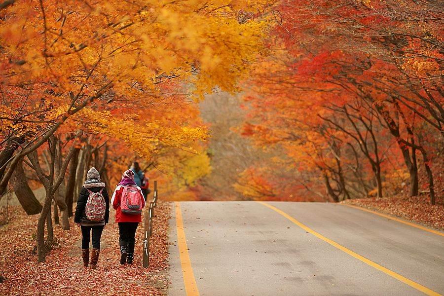 內藏山秋景。(圖取自Free@KOREA網站)