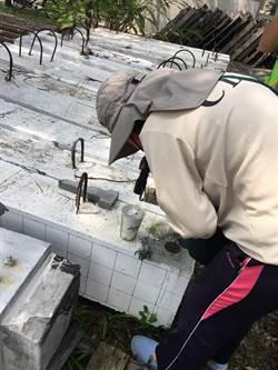 台南1天新增2起本土登革熱 安南區6旬婦人今午確診