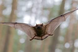 蝙蝠和蟑螂關一起會?結局超展開