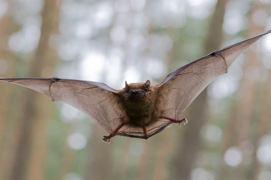蝙蝠和蟑螂關一起會?結局超展開(示意圖/達志影像)