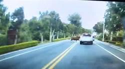 大黃牛衝撞小轎車  金門網友:馬路如「牛」口