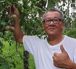 退休院長種「沙梨」 新住民的鄉愁食物