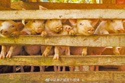 利潤率100% 陸養豬業迎黃金期