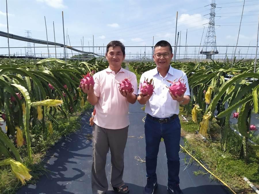 農糧署南區分署姚志旺(右)參觀黃政德紅龍果園。(農糧署提供/劉秀芬台南傳真)