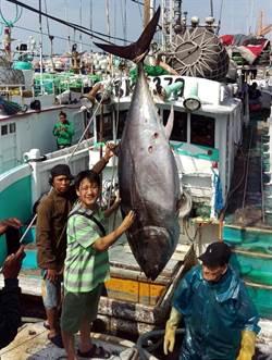 黑鮪配額300噸給日本? 漁業署:將要求用大目鮪換