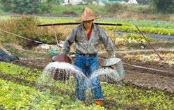 除了老農津貼還可享年金 111萬人受惠!選前大放利多 農民也能領退休金