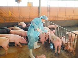 口蹄疫拔針 台灣豬肉可望重啟外銷